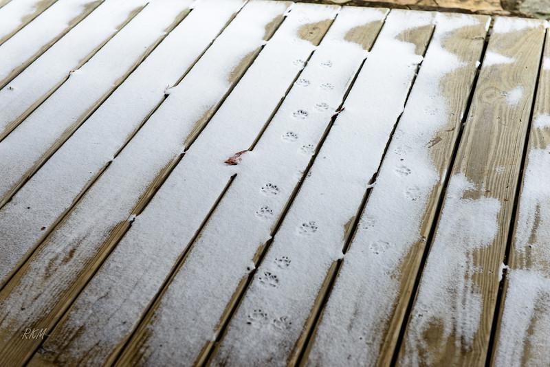 Bradley prints in the snow