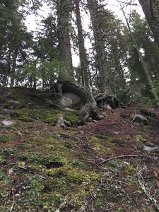 captive boulders