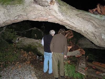 Oak Tree Down 10/5/2011