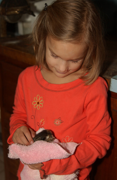 Abigail caring for the kitten