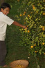Christian & our ornamental lemon tree