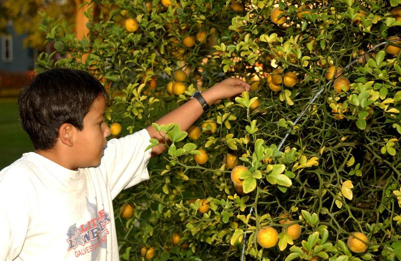 Christian & our ornamental lemon tree