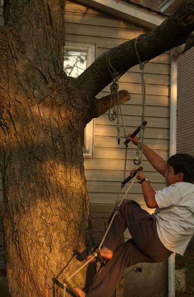 Christian climbing our sugar maple