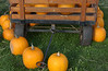 Pumpkins at Harvest Fest