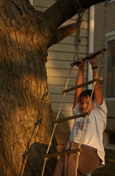 Christian climbing our sugar maple