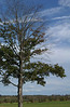 Tree & odd sky at harvest fest