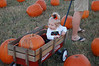 To the pumpkin patch we go...