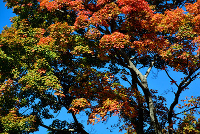 10/11/2016 Mike Orazzi | Staff Fall color along Route 6 in Terryville.