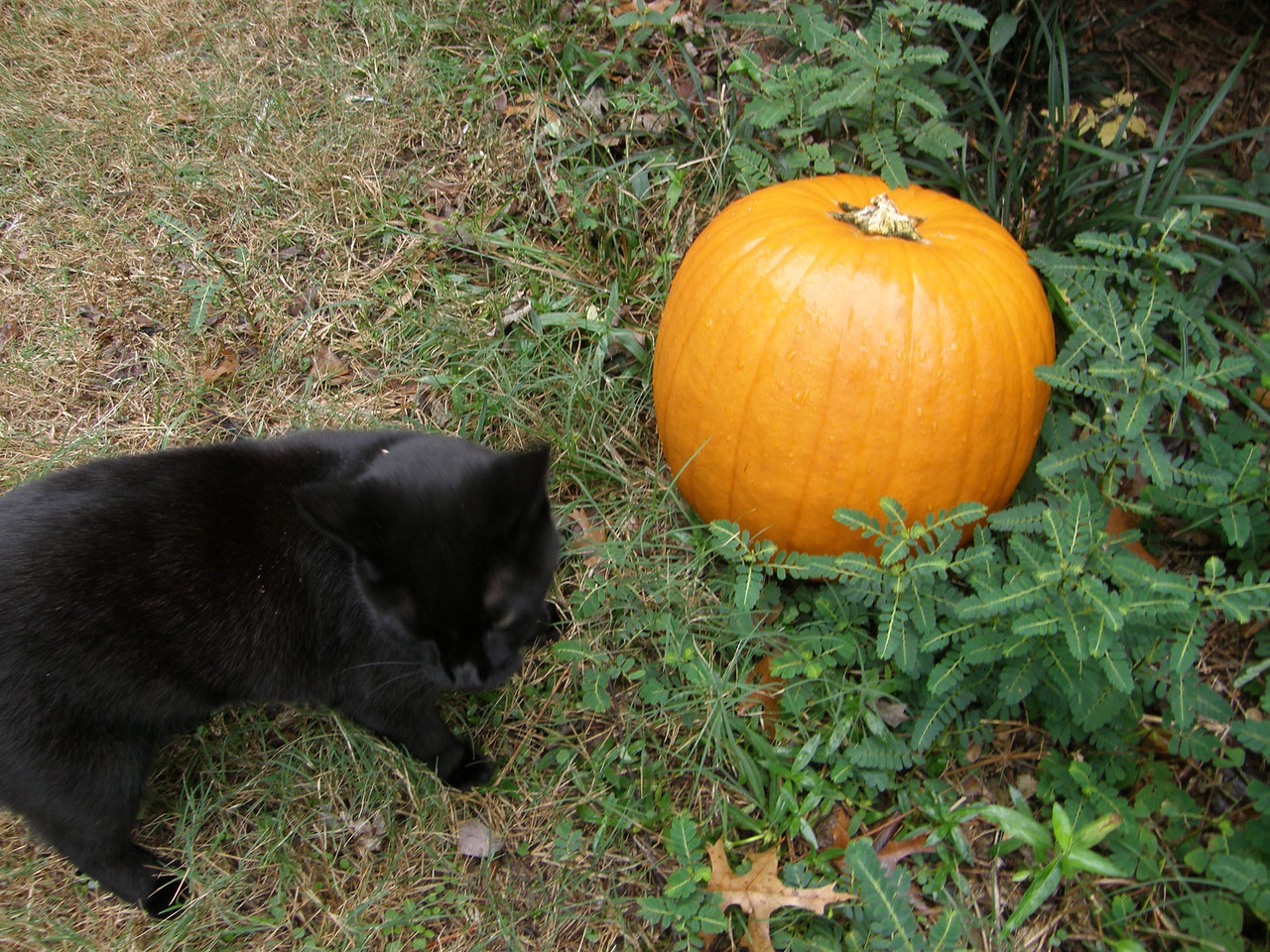 "Salem says ""get that darn pumpkin out of here!"