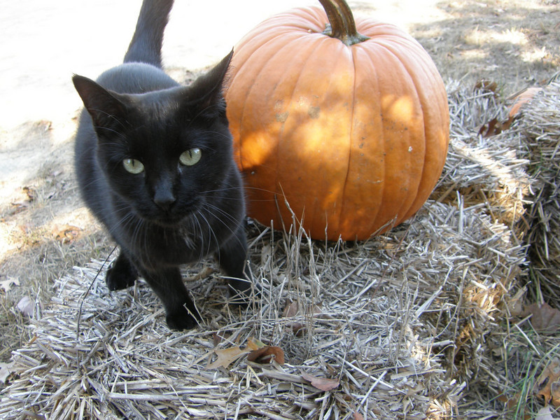 Salem practicing for Halloween.