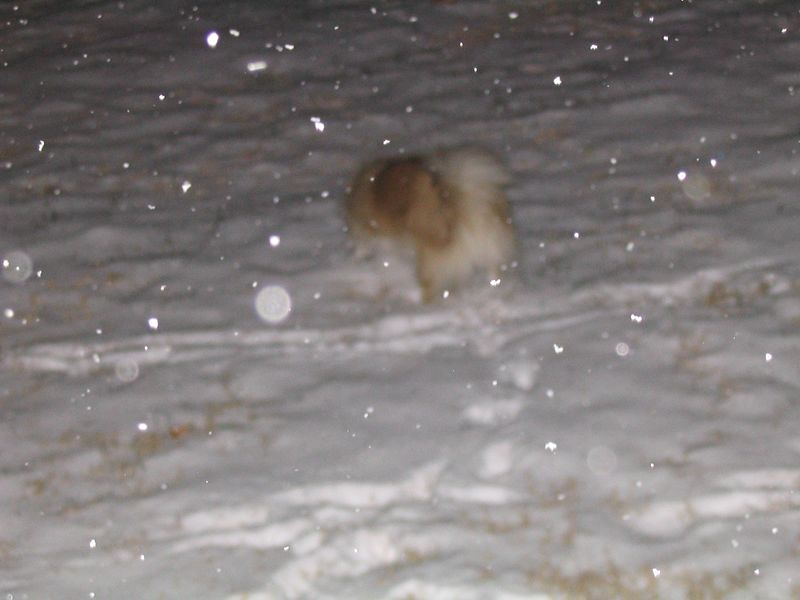 Mitzy plays in the snow