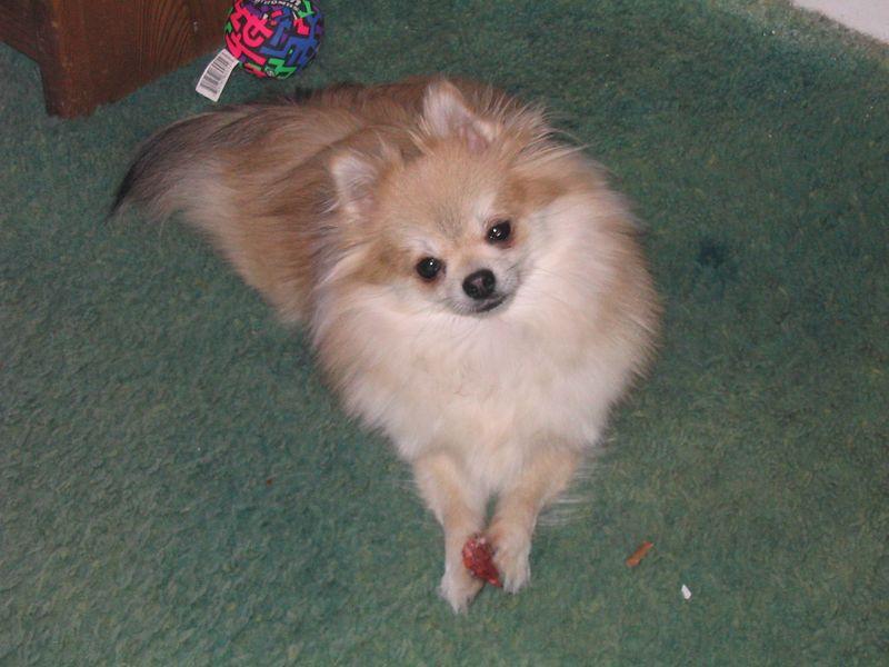 Mitzy eats her treats