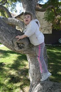 Good Climbing Trees in Redondo Beach