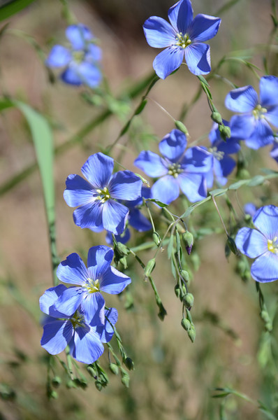 These were prolific in Modoc and Lassen Counties.