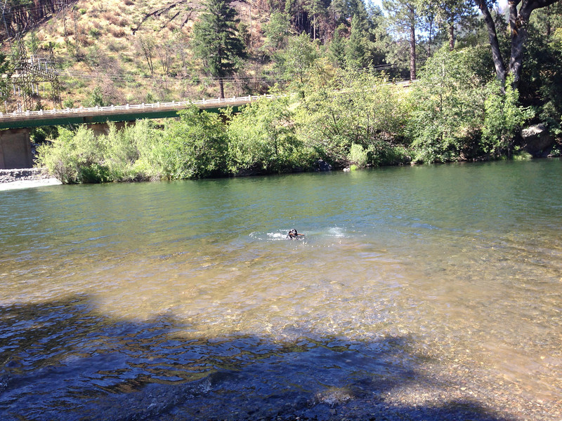 Kona fetches stick in Feather River.