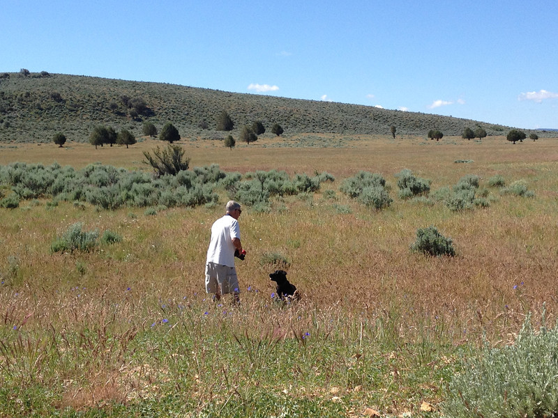 Man and dog in field.