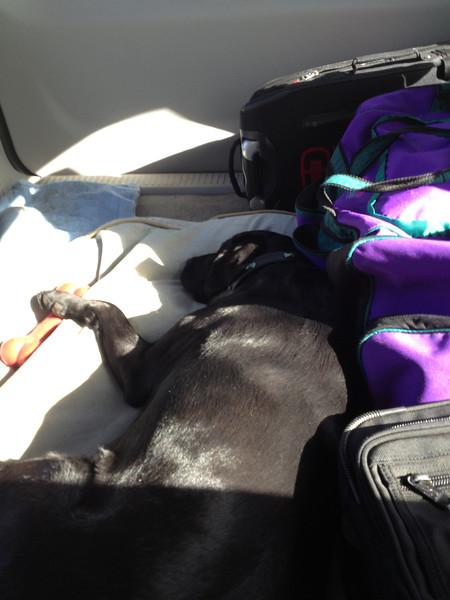 Dog in car with paw on bone.