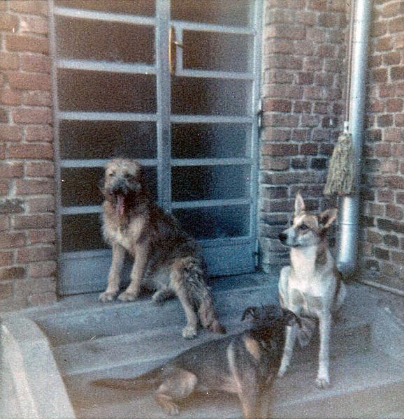 Abby (Thorbahn), Ziggy (Hubard), Daisy. Asmara, Eritrea, 1968