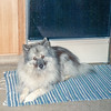 Nellie I, our first Keeshond