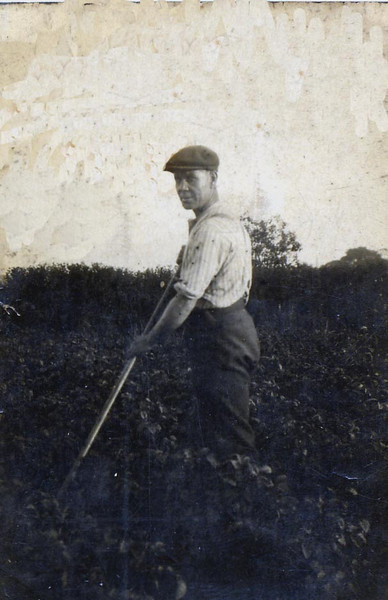 George Parsons working in his allotment in farrar st
