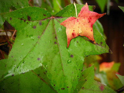 Green November