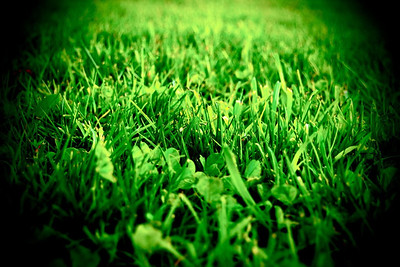 The Grass is Greener