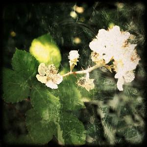 berries-o-matic