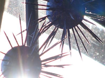 Sunny Urchins