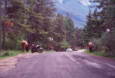 21 Banff