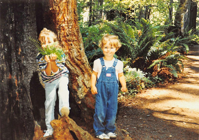 Coast Redwoods National park 1993