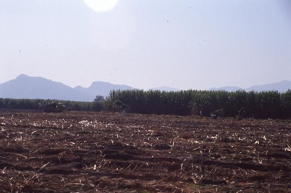 004 Tala Sugar Cane Harvest