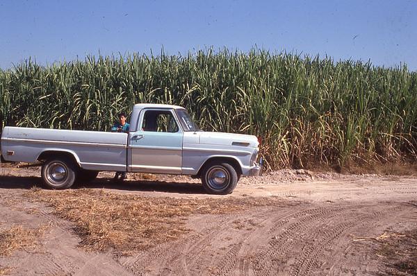 002 Tala Sugar Cane