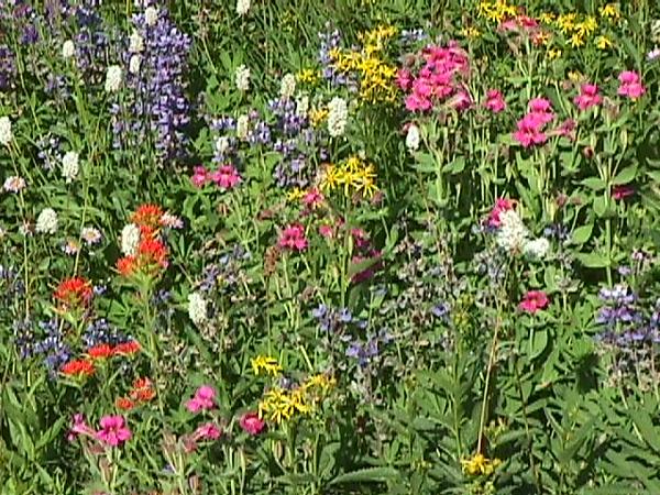 09 Paradise Park Flowers