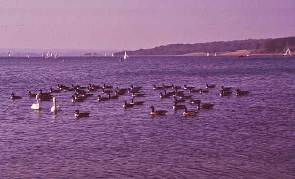 Rutland Water 1996_007