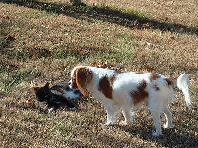 "Auburn & ""Hwy 75"" cat playing."