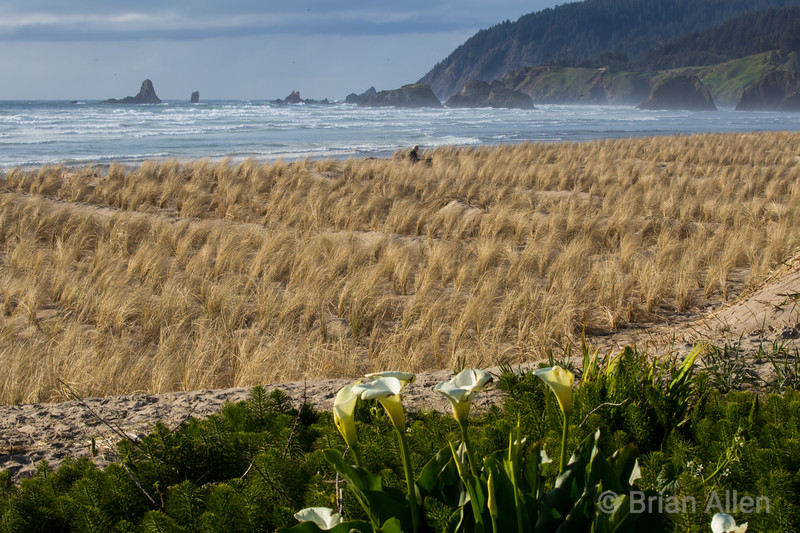Cannon Beach, OR view from Ocean Ave.