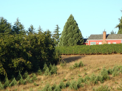 Oregon Wine Country August 2011