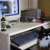 My cat Oreo* updating his facebook page.<br /> <br /> *Oreo Rogers, he needs facebook friends.