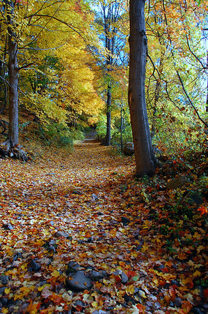 falling leaves hide the path so quietly John Bailey