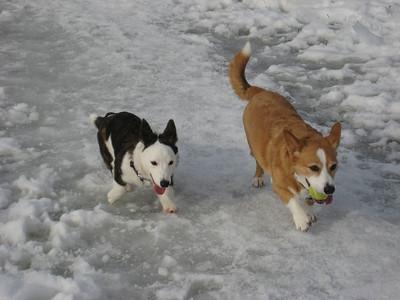 Otis & Luna Mae