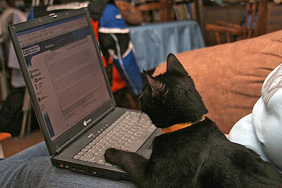 Marky checking his e-mail...