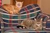 It's a cat's life!!!