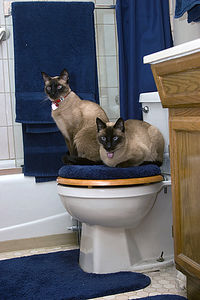 Spike and Spanky in one of their favorite hangouts...