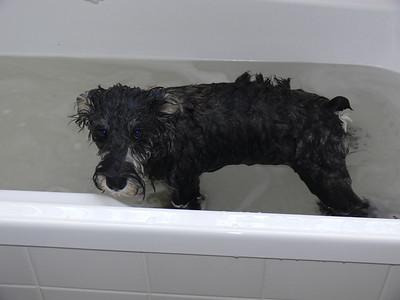 Grrrr Bath time