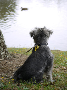 Watching the Ducks