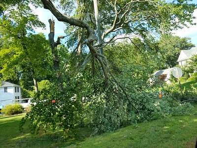 Neighbor's tree damage