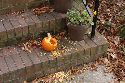 Jamie's pumpkin she planned on cooking - before the squirrels found it