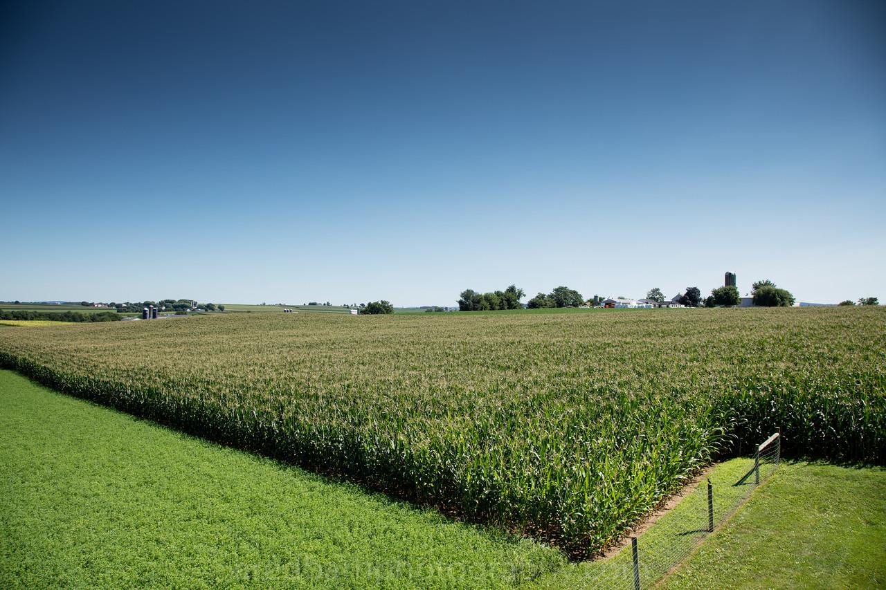 Corn fields every wear