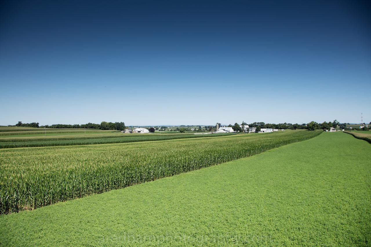 Alfalfa  and Corn