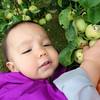 Picking my first apple